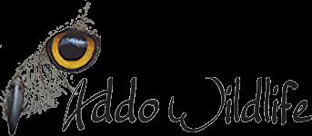 Addo Wildlife | Addo | South Africa | Eastern Cape | Addo Elephant Park